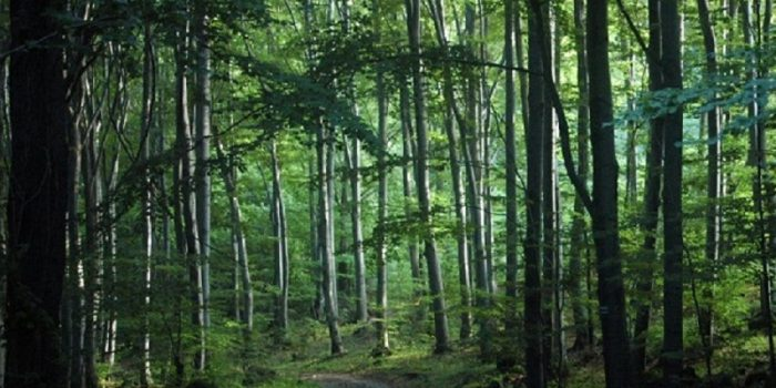 Types Of Forests And Their Characteristics
