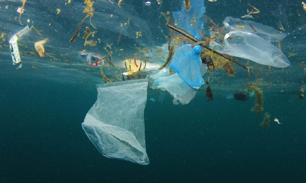 Water Pollution Affects the Environment