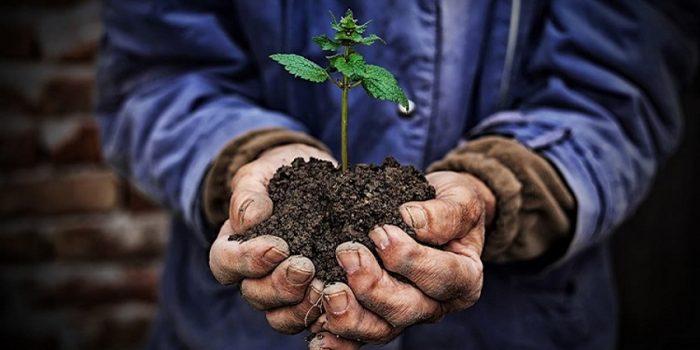 Benefits Of Environmental Education In Children